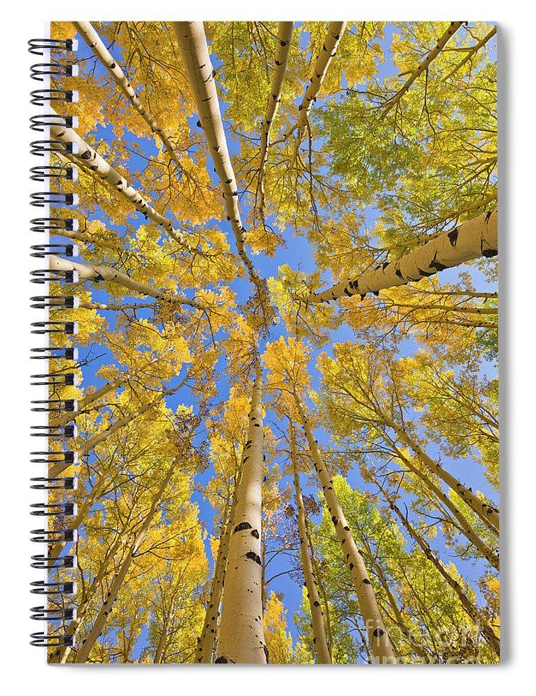 00559133 Spiral Notebook featuring the photograph Quaking Aspens Overhead by Yva Momatiuk John Eastcott