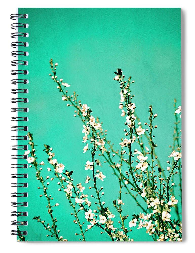 Flowers Spiral Notebook featuring the photograph Reach - Botanical Wall Art by Melanie Alexandra Price