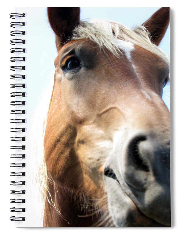 Horse Spiral Notebook featuring the photograph Really by Amanda Barcon