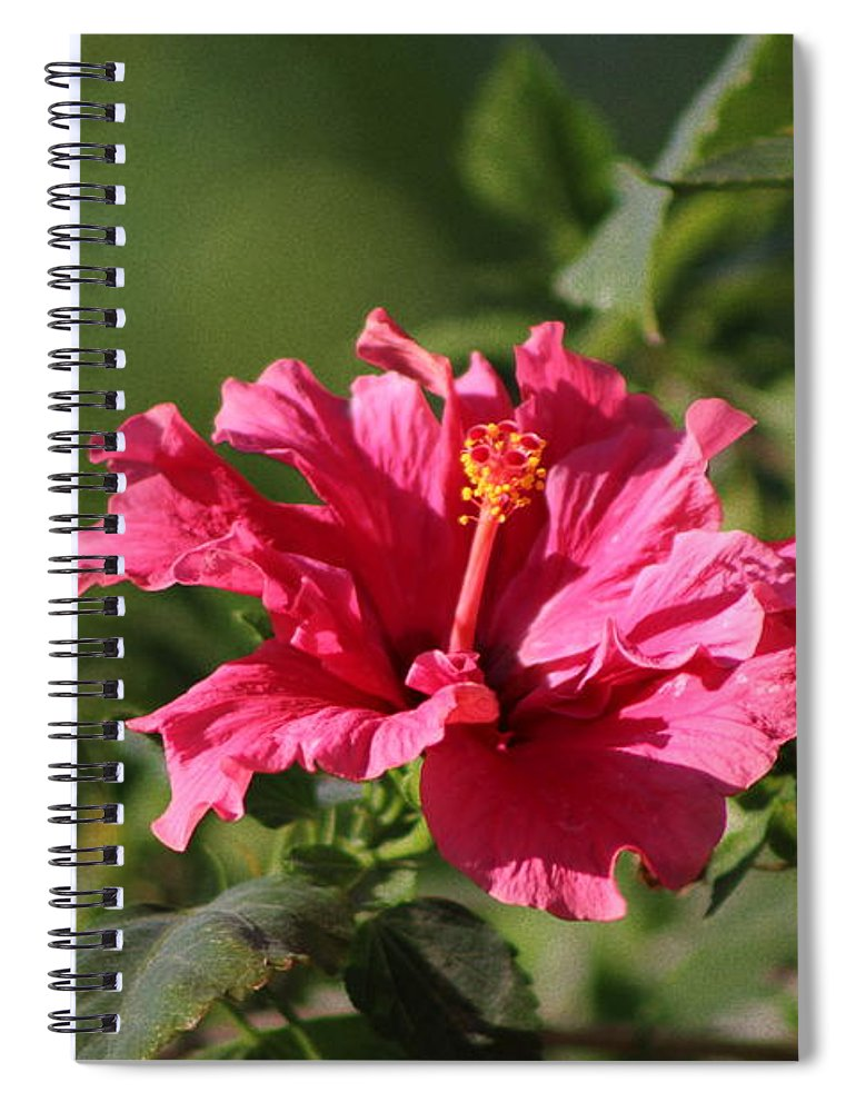 Red Chili Pepper Spiral Notebook featuring the photograph Red Chili Pepper Hibiscus Flower by Colleen Cornelius