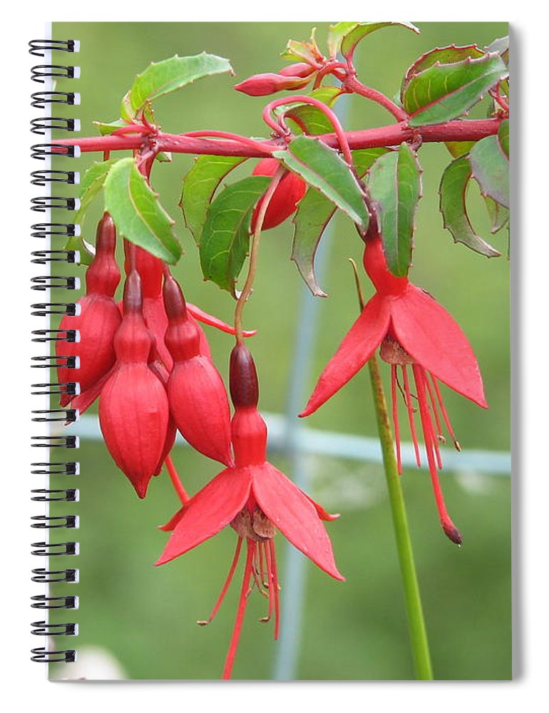 Fresia Spiral Notebook featuring the photograph Red Fresia by Kelly Mezzapelle