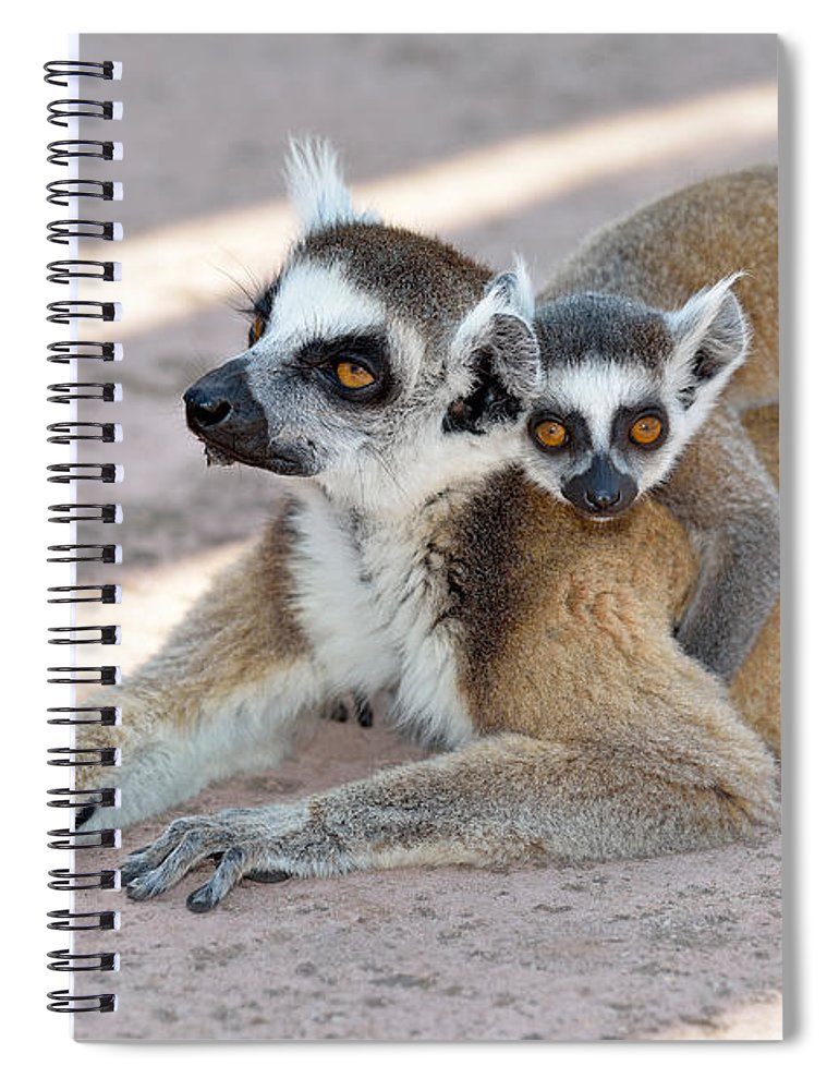 Ring Tailed Lemur Spiral Notebook featuring the photograph Ring Tailed Lemur With Baby by George Atsametakis