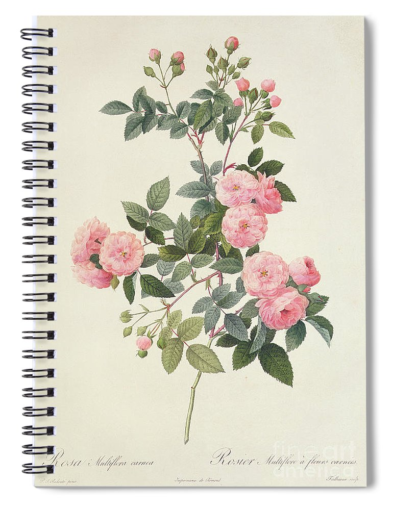 Rosa Spiral Notebook featuring the drawing Rosa Multiflora Carnea by Pierre Joseph Redoute