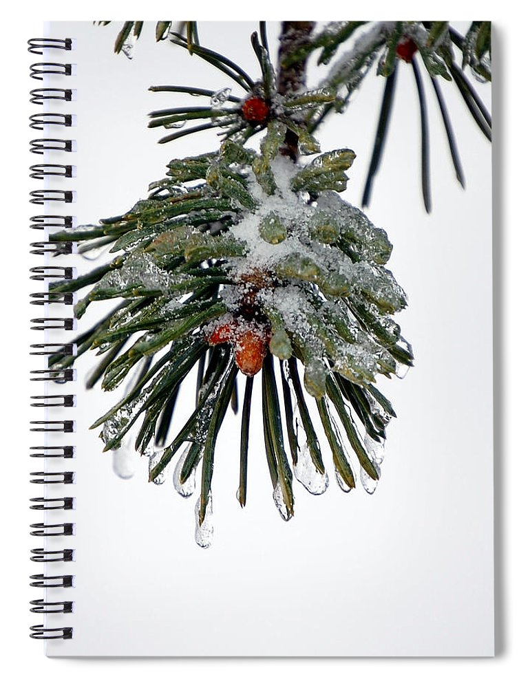 Winter Spiral Notebook featuring the photograph Scots Pine and Ice by Lisa Kane