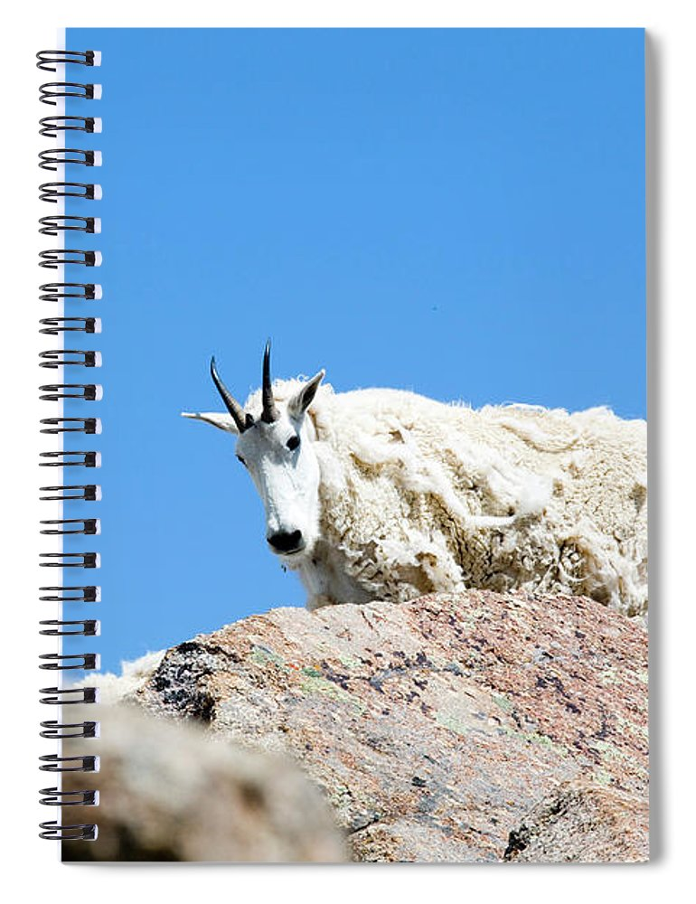 Mount Massive Spiral Notebook featuring the photograph Scruffy Mountain Goat On The Mount Massive Summit by Steve Krull