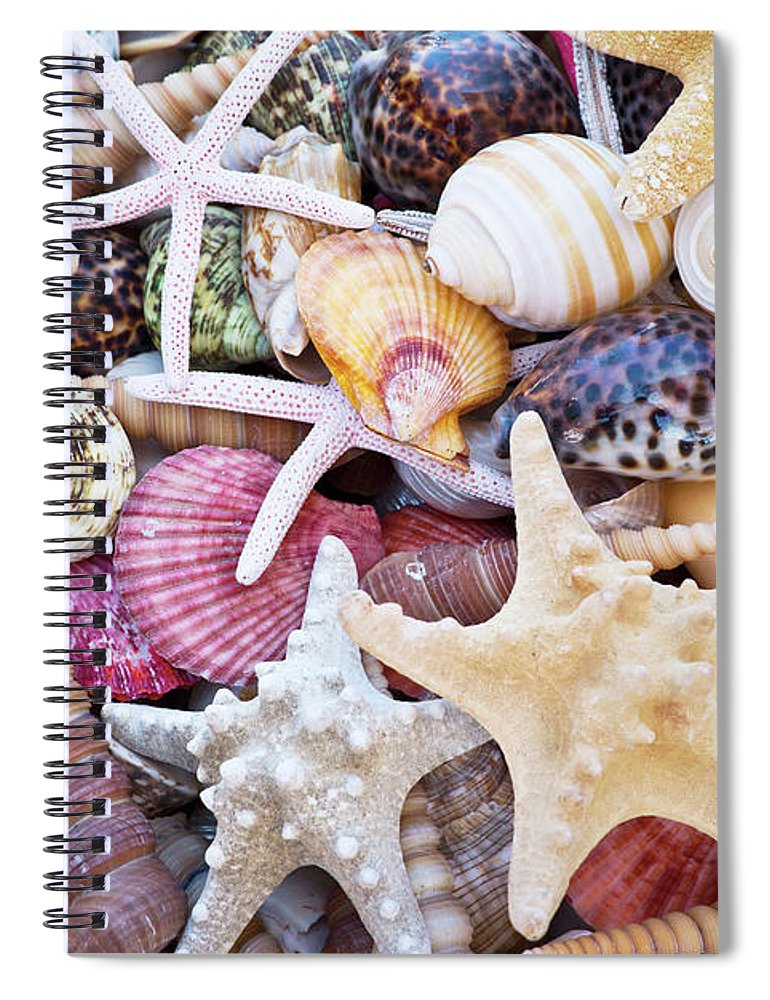 Seashells Spiral Notebook featuring the photograph Seashells by Delphimages Photo Creations