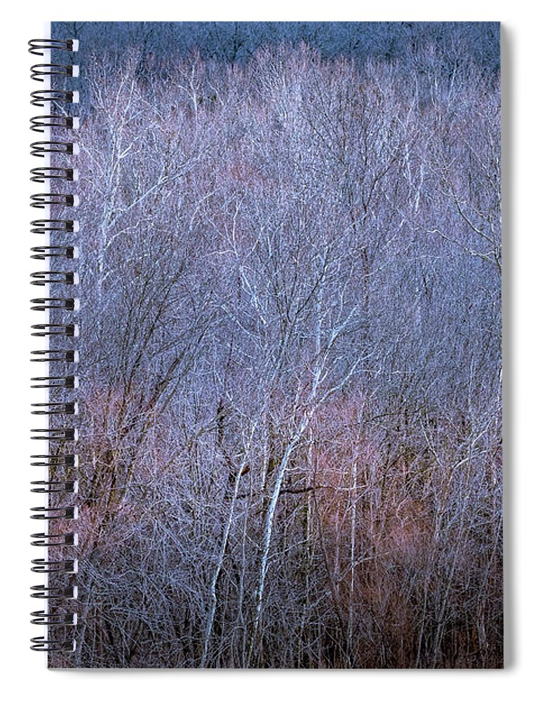 Trees Spiral Notebook featuring the photograph Silent Trees by Allin Sorenson