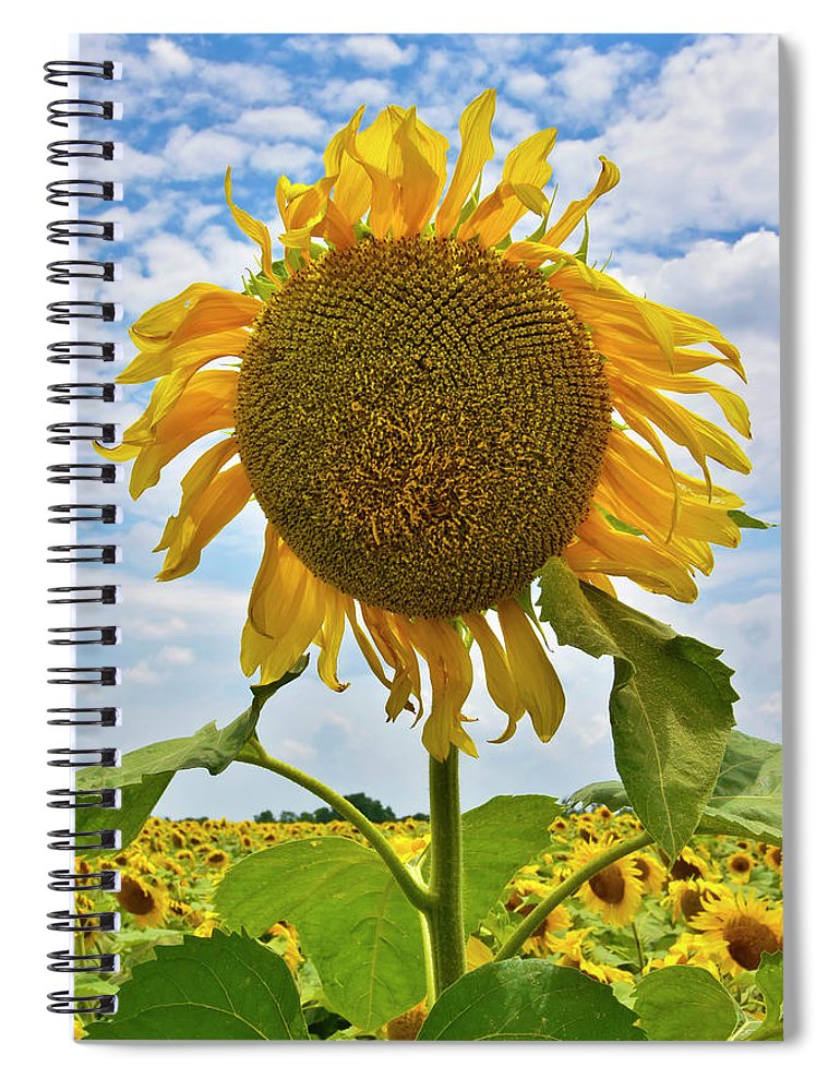 Sister Golden Hair Spiral Notebook featuring the photograph Sister Golden Hair by Skip Hunt