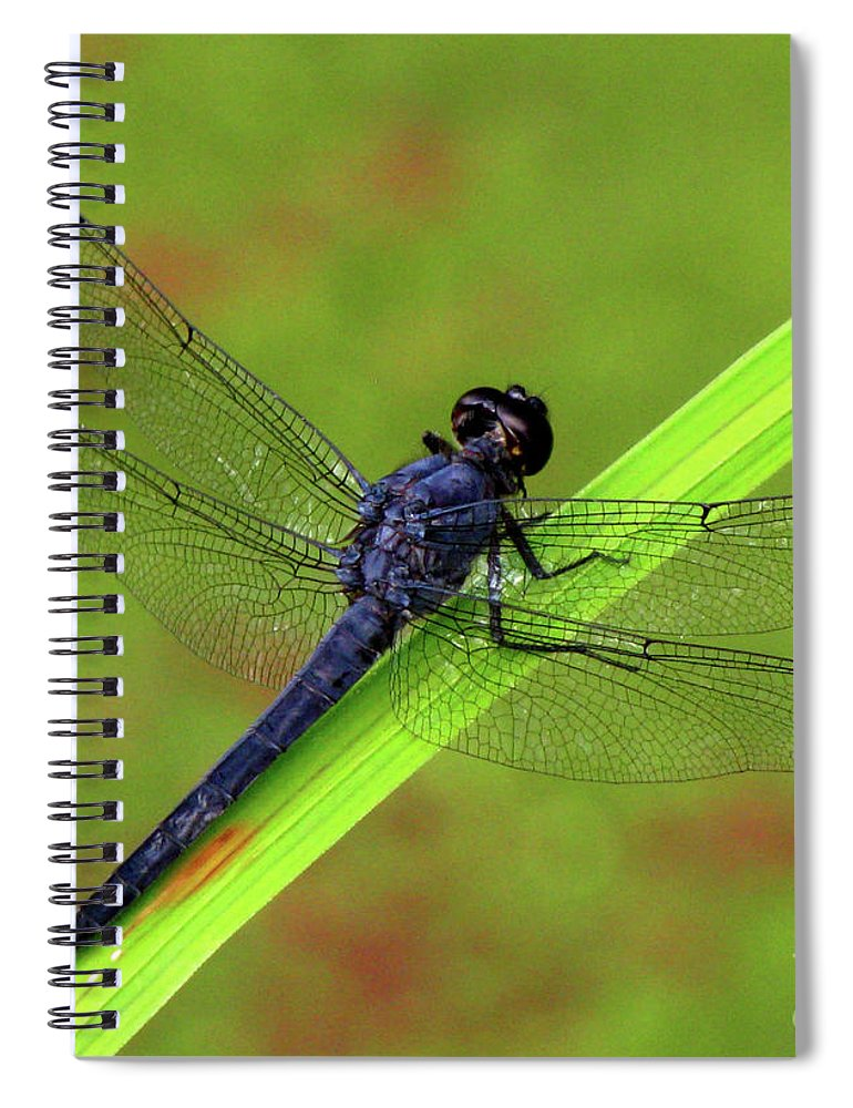 Insect Spiral Notebook featuring the photograph Slaty Skimmer Dragonfly by Donna Brown