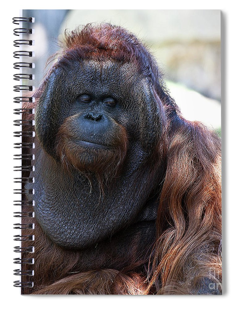Orang Untang Spiral Notebook featuring the photograph Sneak A Peek by Heiko Koehrer-Wagner