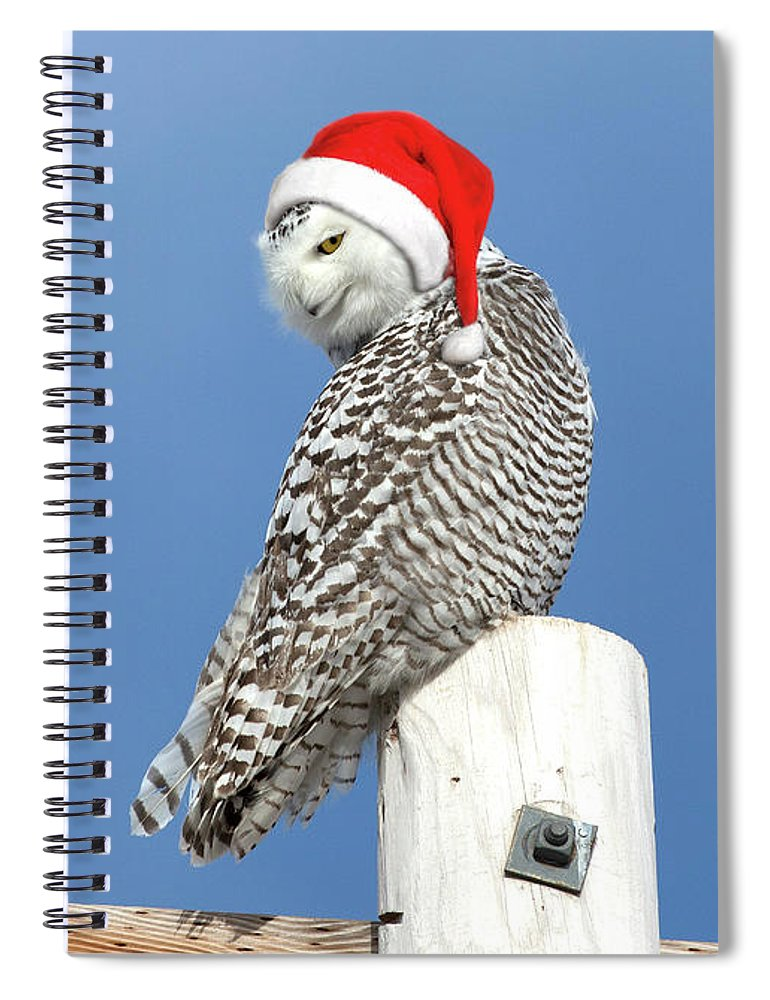 Snowy Owl Spiral Notebook featuring the photograph Snowy Owl Christmas Card by Everet Regal