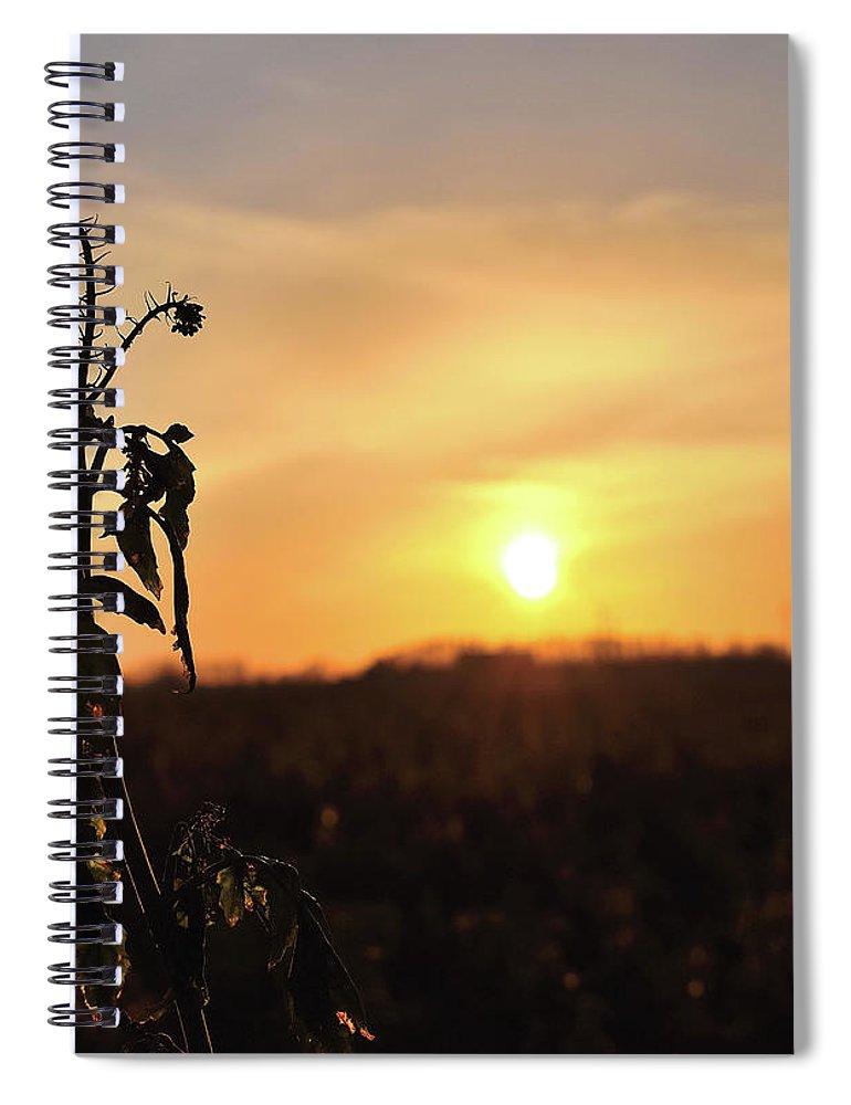 Sonnenuntergang Blume Flowwer Sky Himmel Spiral Notebook featuring the photograph Sonnenuntergang by Scimitarable