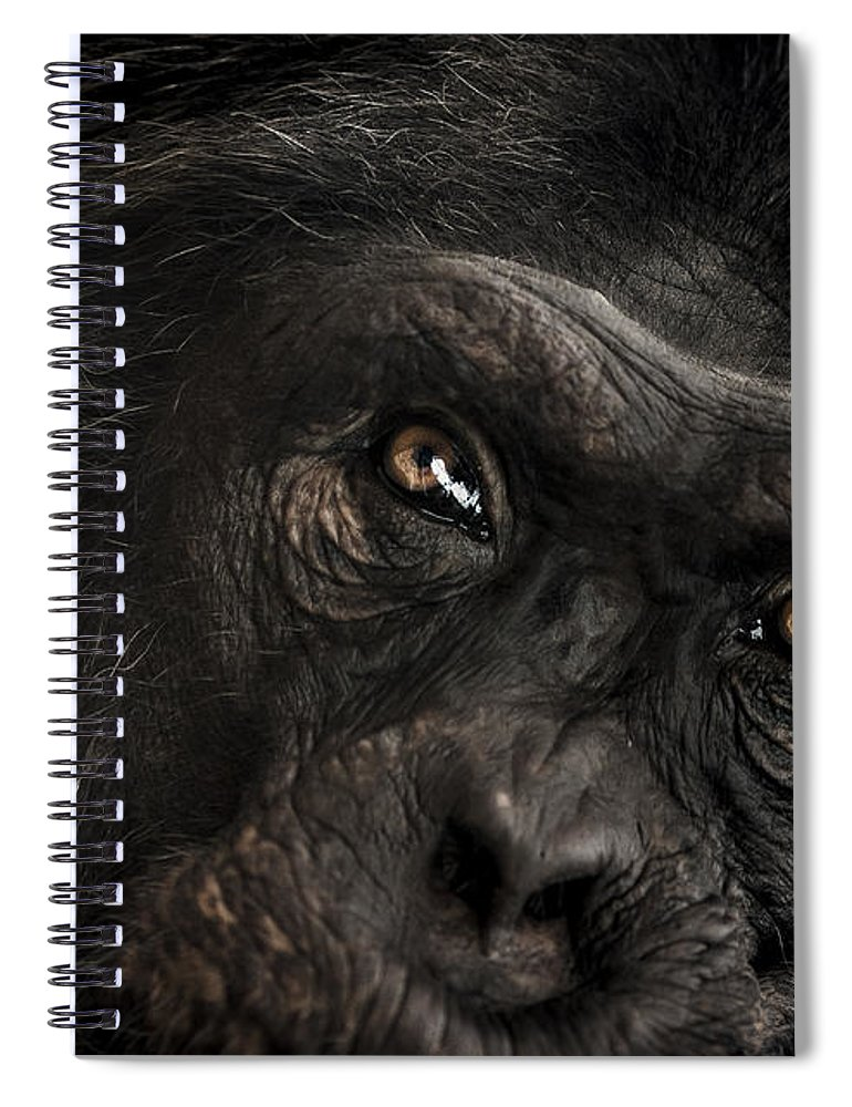 Chimpanzee Spiral Notebook featuring the photograph Sorrow by Paul Neville
