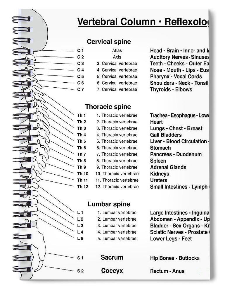 Spine Column Reflexology Chart Vertebrae Spiral Notebook For Sale By