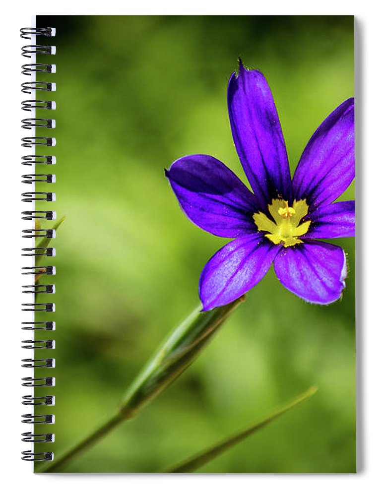Flower Spiral Notebook featuring the photograph Spring Blooms by Allin Sorenson