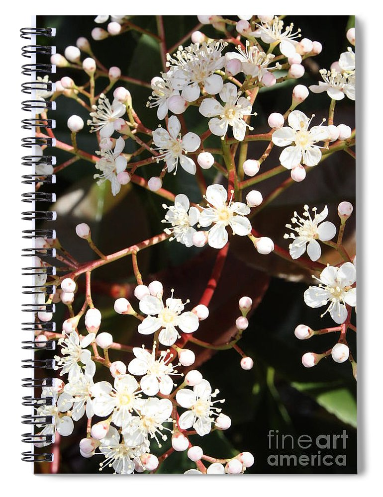 Spring Spiral Notebook featuring the photograph Spring Blossoms Macro by Carol Groenen