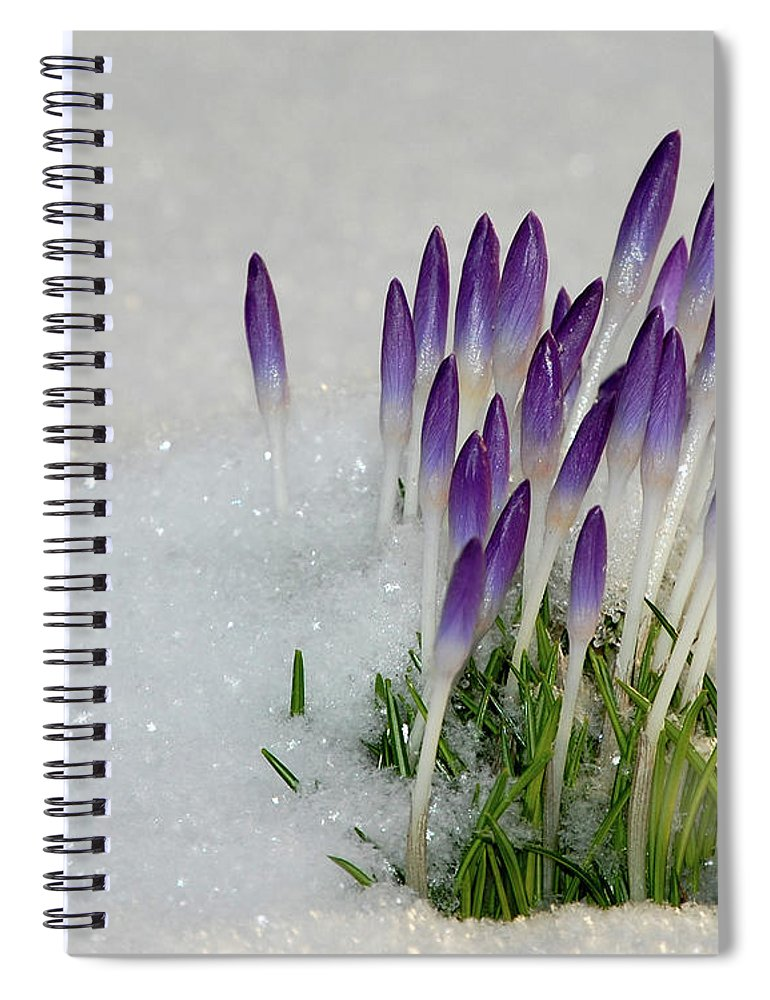 Spring Spiral Notebook featuring the photograph Spring Snow by Lisa Kane