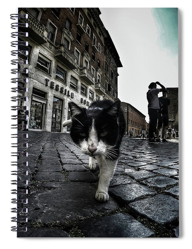 Cat Spiral Notebook featuring the photograph Street Cat by Nicklas Gustafsson