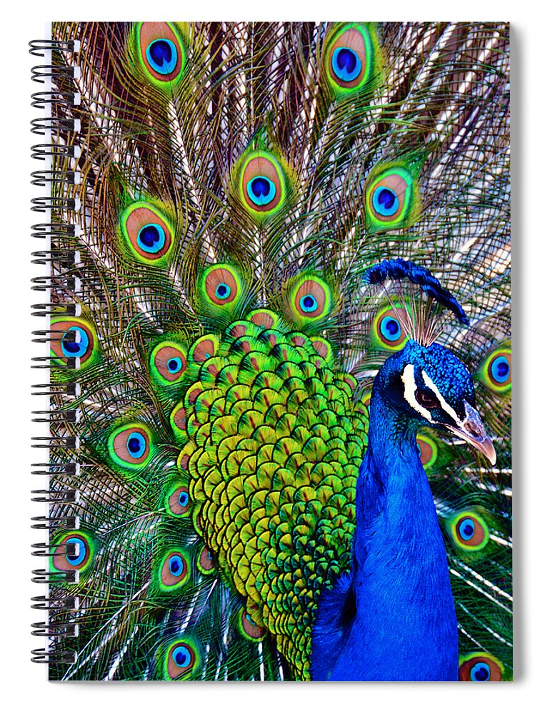 Zoo Spiral Notebook featuring the photograph Strut by Angelina Tamez