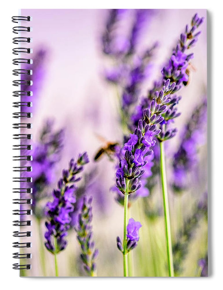 Lavender Spiral Notebook featuring the photograph Summer Lavender by Nailia Schwarz
