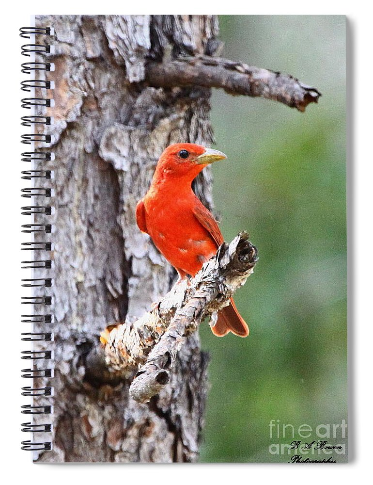 Summer Tanager Spiral Notebook featuring the photograph Summer Tanager by Barbara Bowen