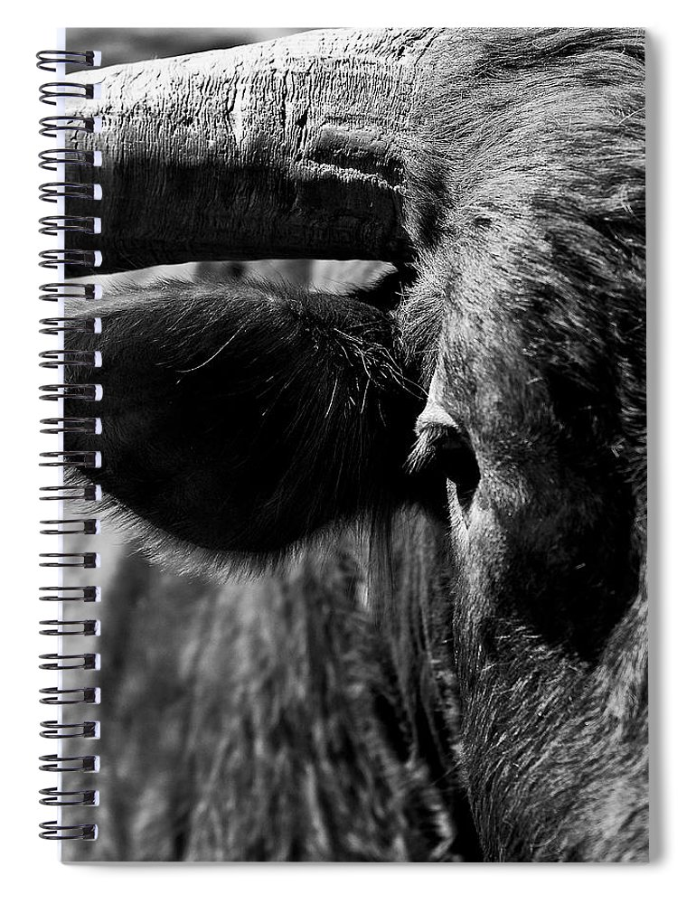 Bull Spiral Notebook featuring the photograph Texas Longhorn Bulls Eye by Onyonet Photo Studios