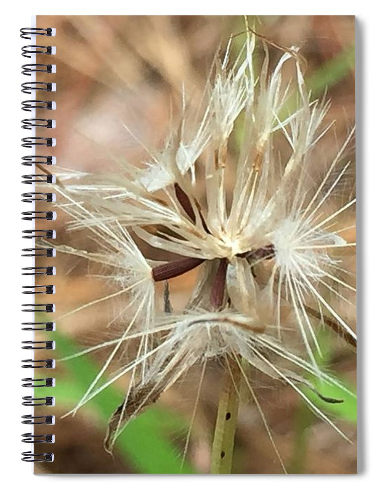 Seed Spiral Notebook featuring the photograph Texas Seeds by Vonda Drees