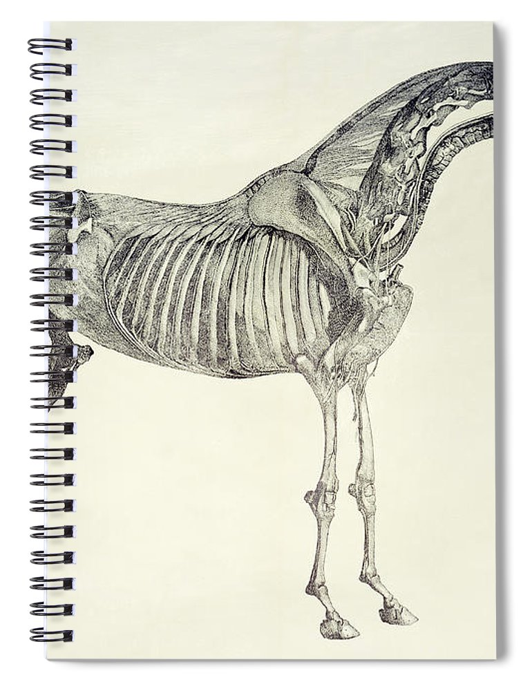 The Anatomy Of The Horse Spiral Notebook for Sale by George Stubbs