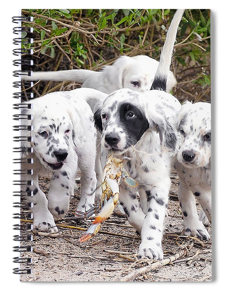 English Setter Spiral Notebook featuring the photograph The Puppy's Prize by Scott Hansen