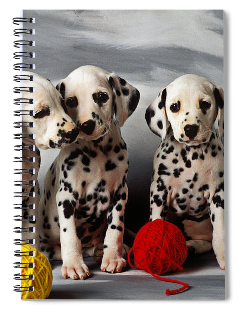 Dalmatian Puppies Three Puppy Dalmatians Pet Pets Animal Animals Dog Dogs Doggy Sit Sits Sitting Young Pedigree Canine Domestic Domesticated Purebred Purebreed Breed Gray Background Vertical Color Colour Colors Canines Calm Cute Hound Hounds Innocence Spot Spots Companionship Together Togetherness Spiral Notebook featuring the photograph Three Dalmatian puppies by Garry Gay