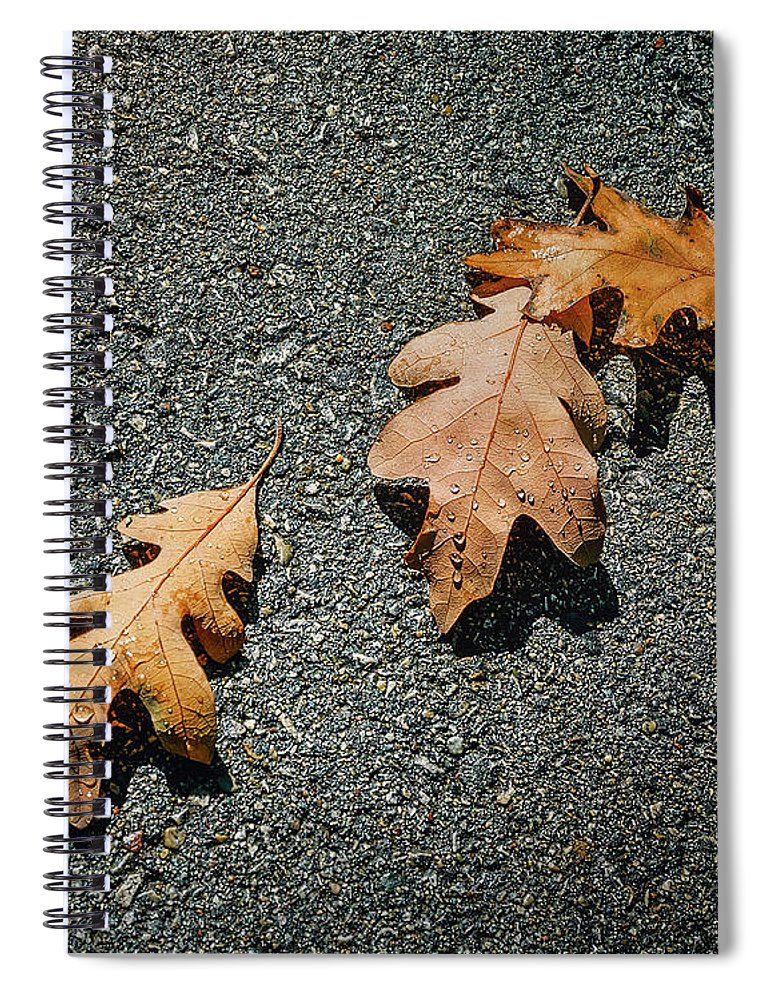 Oak Leaf Spiral Notebook featuring the photograph Three Oak Leaves by Scott Norris