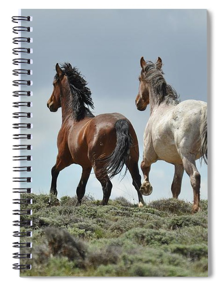 Wild Horses Spiral Notebook featuring the photograph Too Beautiful by Frank Madia