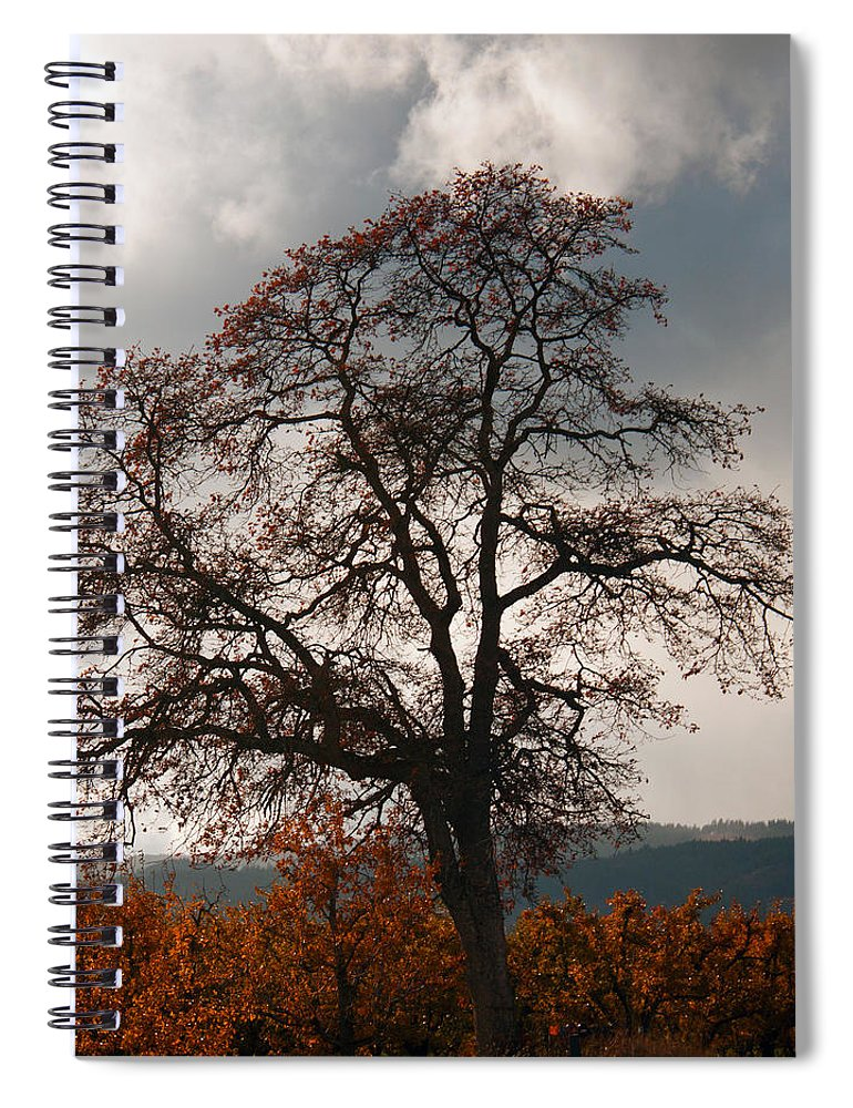 Autumn Spiral Notebook featuring the photograph Touch The Sky by Merrill Beck