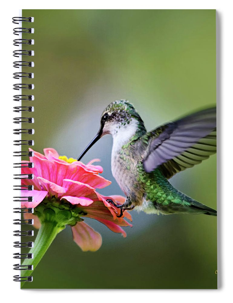Hummingbird Spiral Notebook featuring the photograph Tranquil Joy Hummingbird Square by Christina Rollo