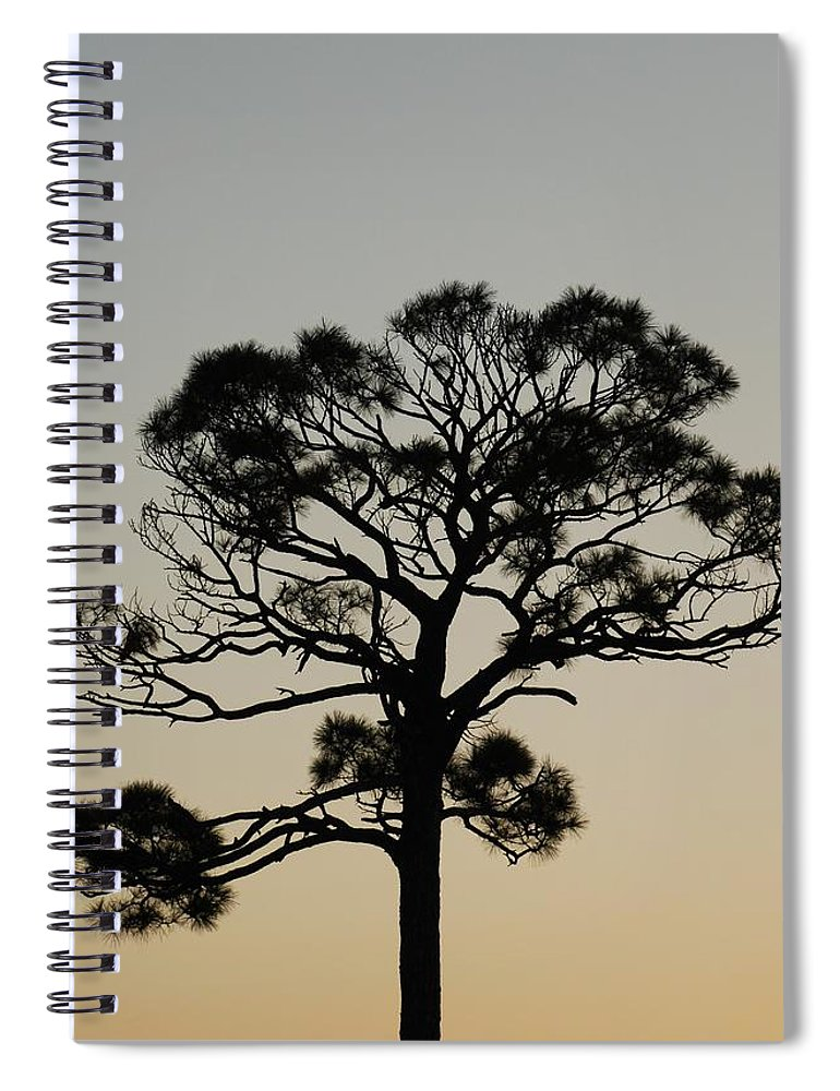 Tree Spiral Notebook featuring the photograph Trees In Sunset by Rob Hans
