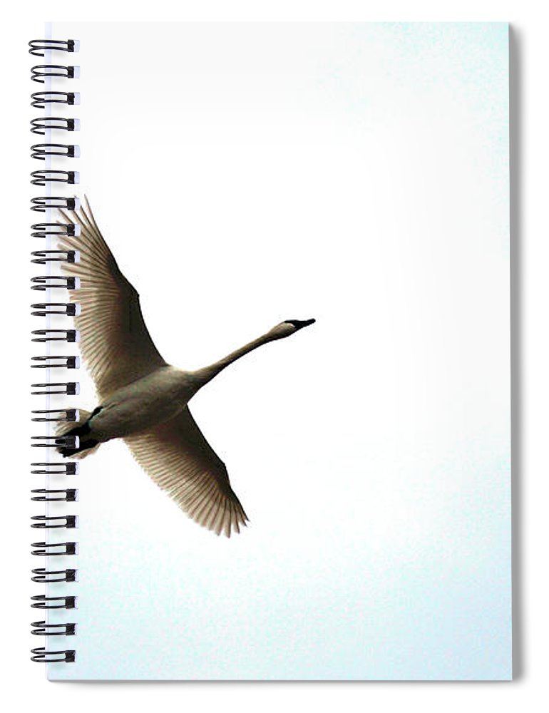 Goose Spiral Notebook featuring the photograph Trumpeter Swan In Flight by Brian O'Kelly