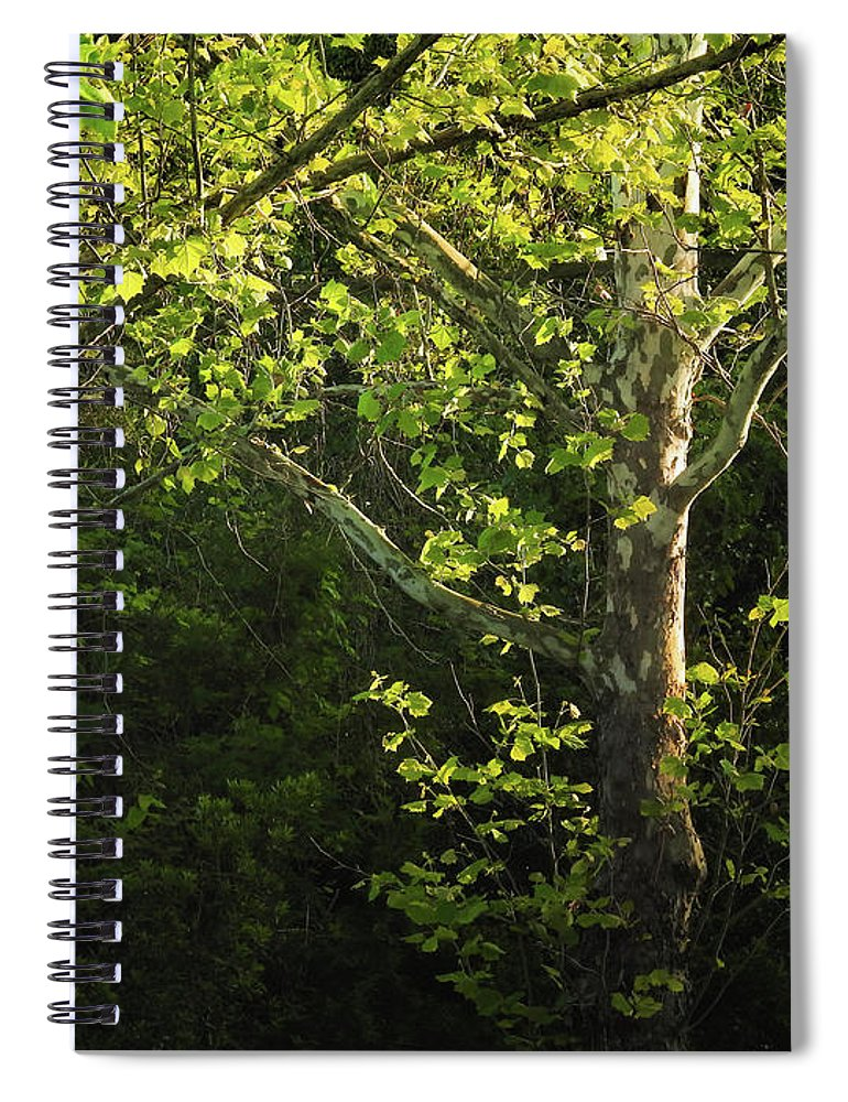 Maple Spiral Notebook featuring the photograph Branches Of Lovely Light by Laura Ragland