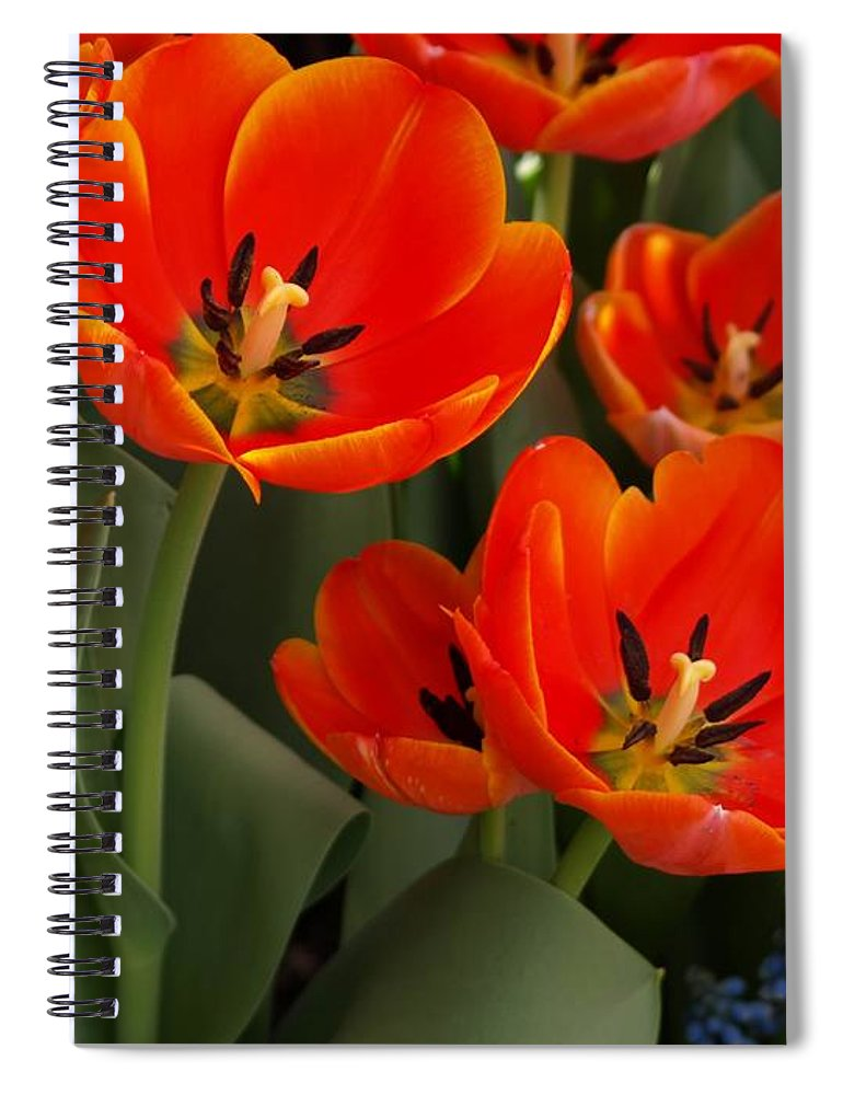 Ann Keisling Spiral Notebook featuring the photograph Tulip Power by Ann Keisling