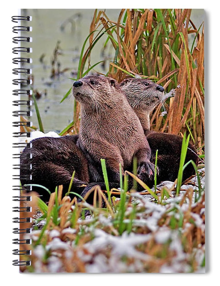 North American River Otter Spiral Notebook featuring the photograph Two Heads Are Better Than One by Sharon Talson