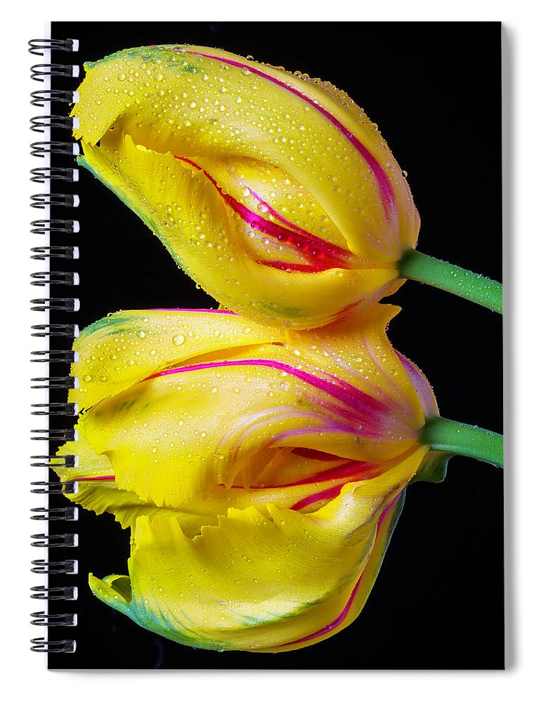 Green Spiral Notebook featuring the photograph Two Yellow French Tulips by Garry Gay