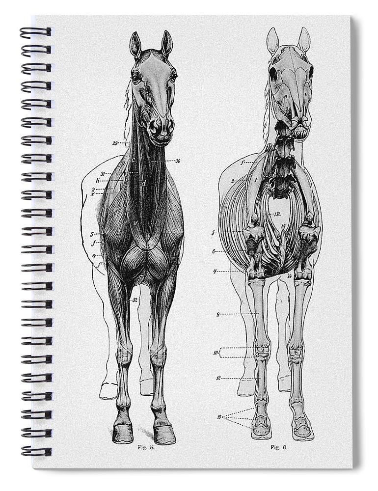 Vintage Horse Anatomy Scientific Illustration Spiral Notebook for ...