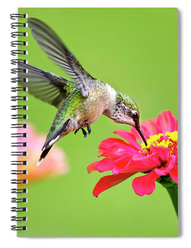Hummingbird Spiral Notebook featuring the photograph Waiting In The Wings by Christina Rollo