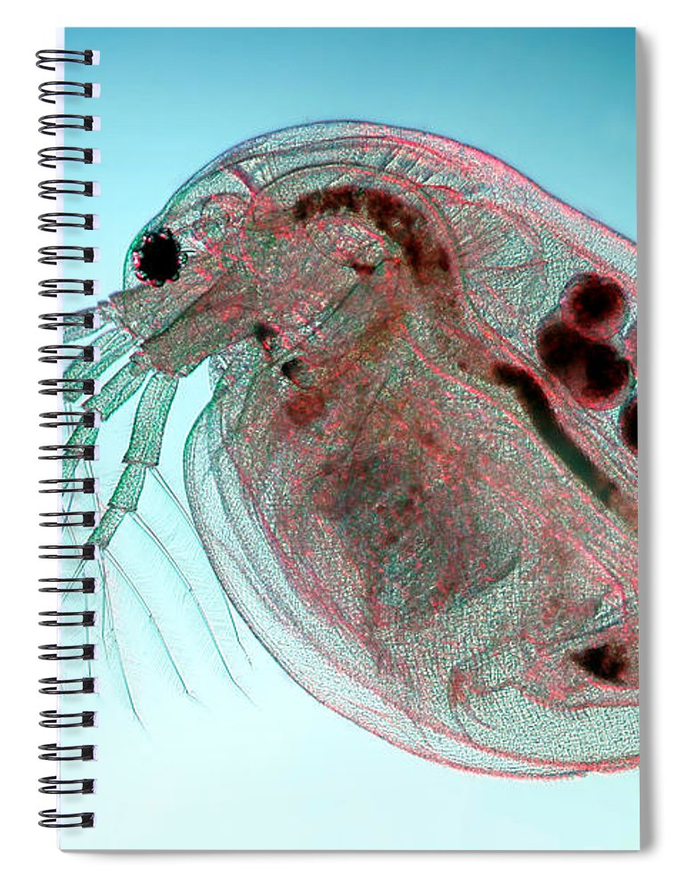 Water Flea Daphnia Magna Spiral Notebook For Sale By Ted Kinsman