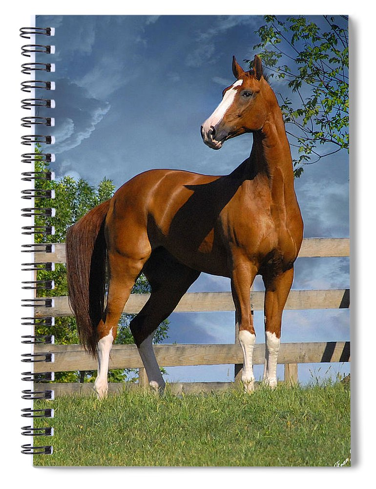 Horses Spiral Notebook featuring the photograph Welt Adel by Fran J Scott