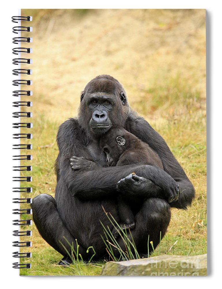 Western Lowland Gorilla Spiral Notebook featuring the photograph Western Gorilla And Young by Jurgen & Christine Sohns/FLPA