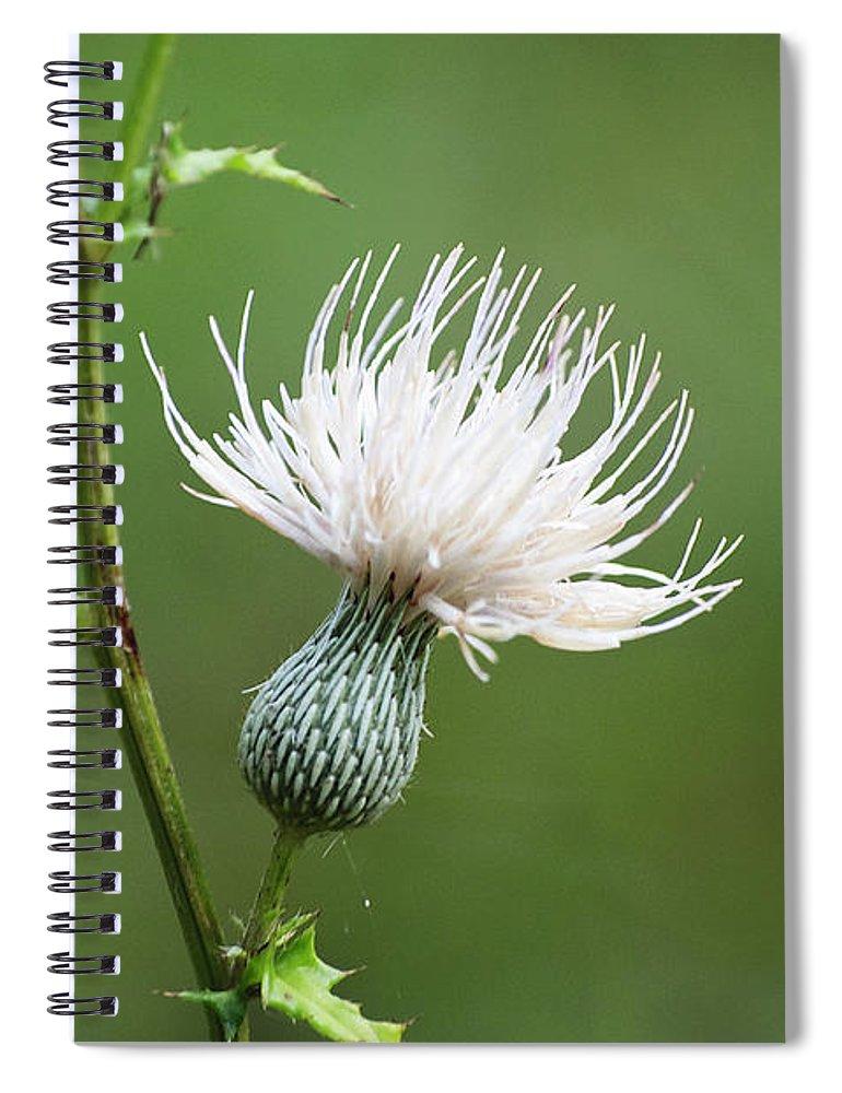 White thistle flower spiral notebook for sale by kenneth albin thistle spiral notebook featuring the photograph white thistle flower by kenneth albin mightylinksfo