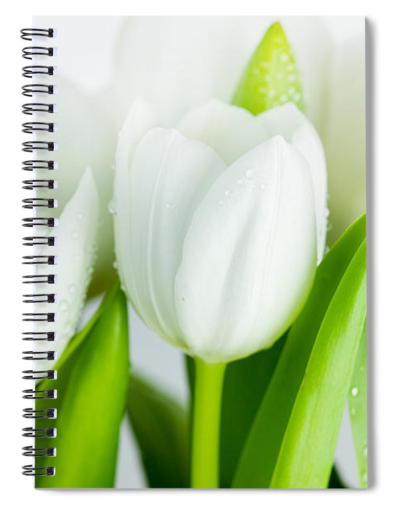 Dew Spiral Notebook featuring the photograph White Tulips by Nailia Schwarz