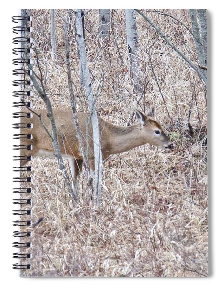 Deer Spiral Notebook featuring the photograph Whitetail Deer 1171 by Michael Peychich