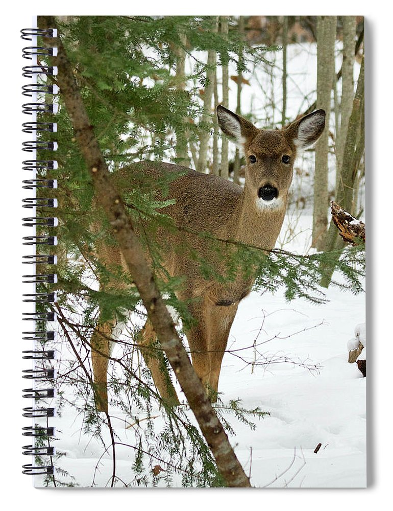 Deer Spiral Notebook featuring the photograph Whitetail Doe 011 by Michael Peychich