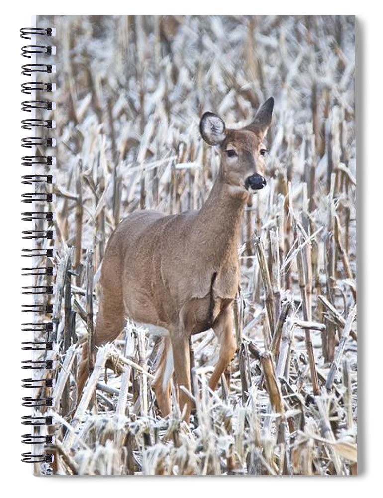 Deer Spiral Notebook featuring the photograph Whitetail In Frosted Corn 537 by Michael Peychich